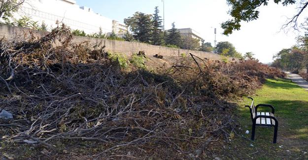 Ağaçlar BaşkentRay kurbanı