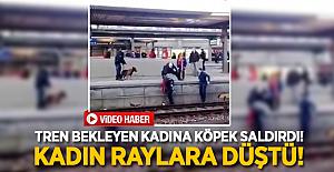 Tren bekleyen kadına köpek saldırdı! Kadın raylara düştü