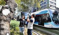 İzmir'de Tramvay Yolunda Asırlık Çınarlara Gençlik Aşısı