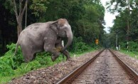 Hindistan'da tren file çarptı